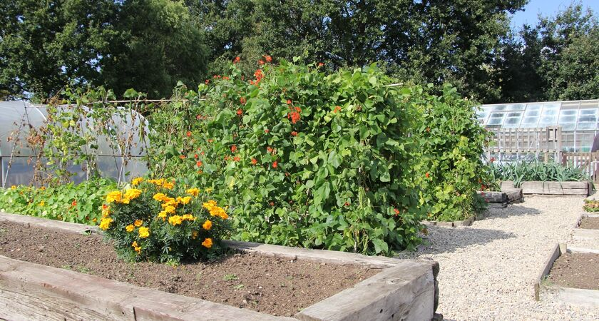 Growing Concern service raised beds