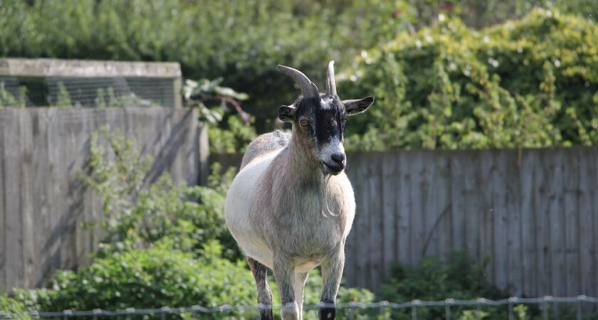 Growing Concern service The Goat next door